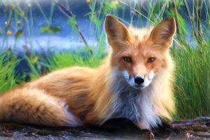 Fox – Painting 6K