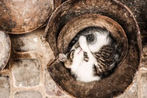 Kitten Sleeping in a bucket HD