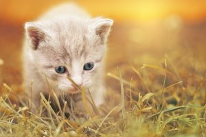 Cute beige Kitten in grass HD