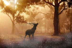 Mystic deer in a fantasy forest 4K