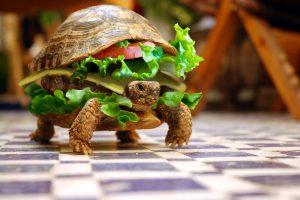 Turtle Sandwich (Fun) HD