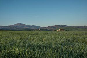 Grasslands 4K