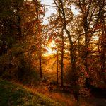 Autumn Forest 6K
