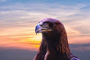 Golden Eagle Face 6K