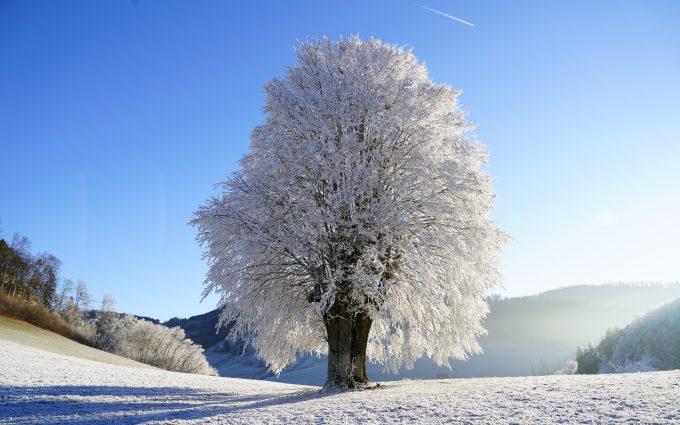 Snowy Tree Winter 8K