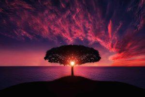 Beautiful Landscape With A Sunset HD