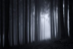 Dark Forest 5K