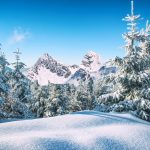 Snowy Forest Winter HD