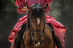 Brown Horse 5K