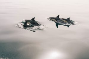 Dolphins on the surface