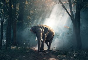 Beautiful Asiatic elephant in the forest