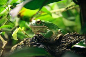 Tree Frog 4K