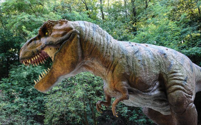 Tyrannosaurus rex 01