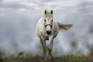 White Horse 5K