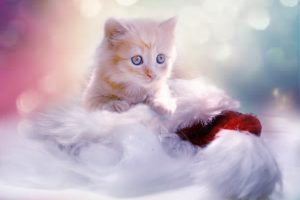 Cute ginger kitten with beautiful blue eyes HD