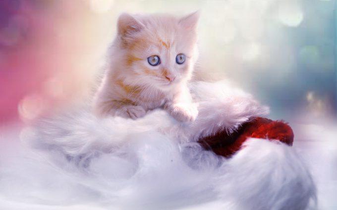 Ginger Kitten 01