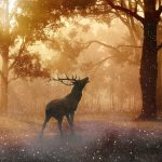 Mystic Deer In A Fantasy Forest