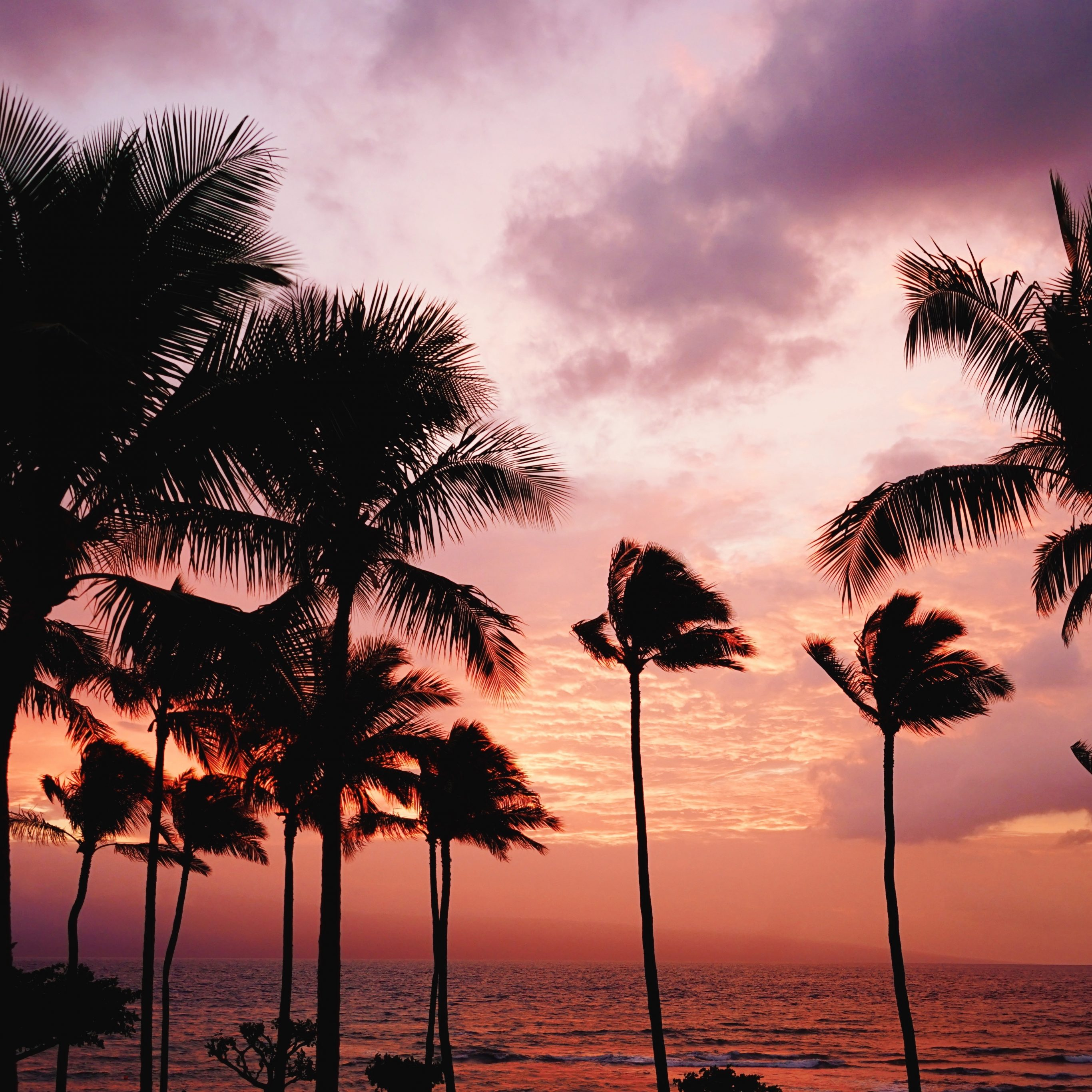 Sunset-On-A-Beach-With-Palm-Trees-2732x2