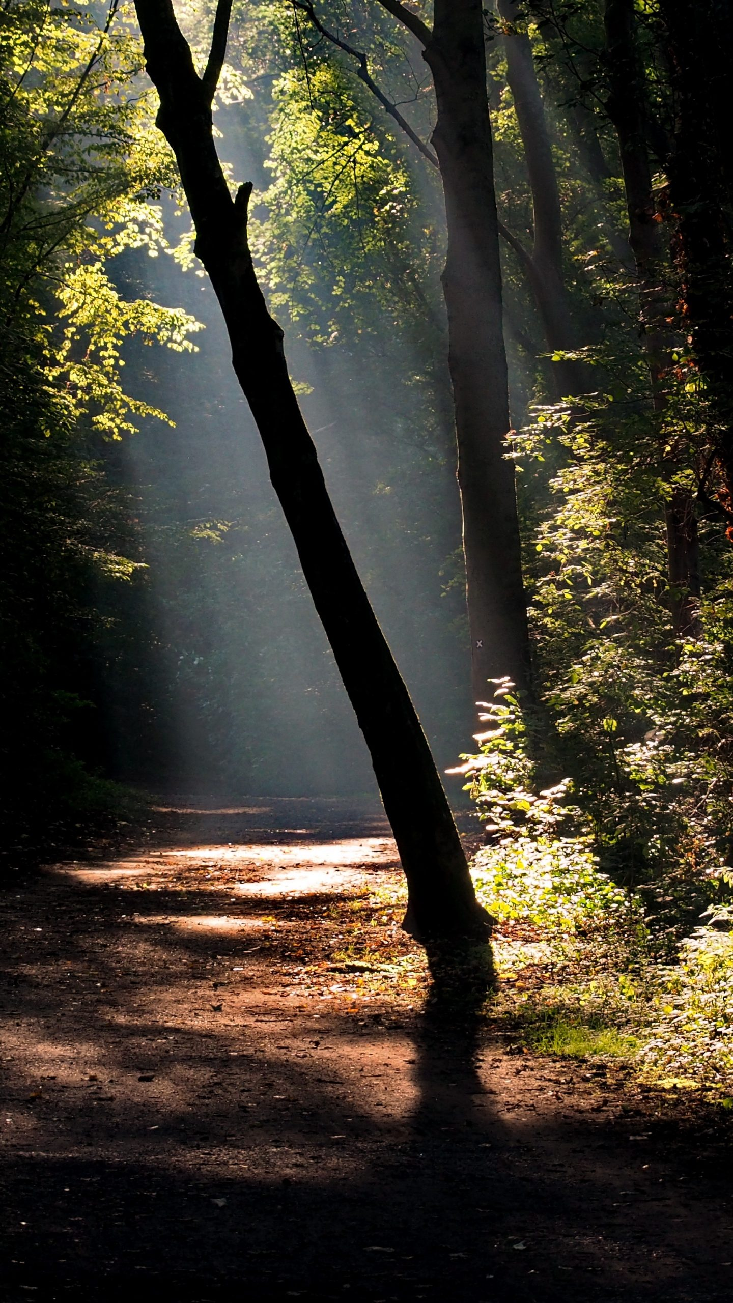 Dark forest road with a ray of sunshine 4K UHD Wallpaper ... Dark Forest Wallpapers Widescreen