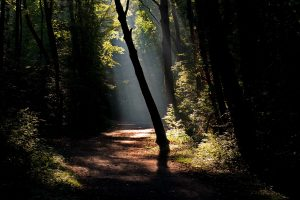 Dark Forest Road With A Ray Of Sunshine
