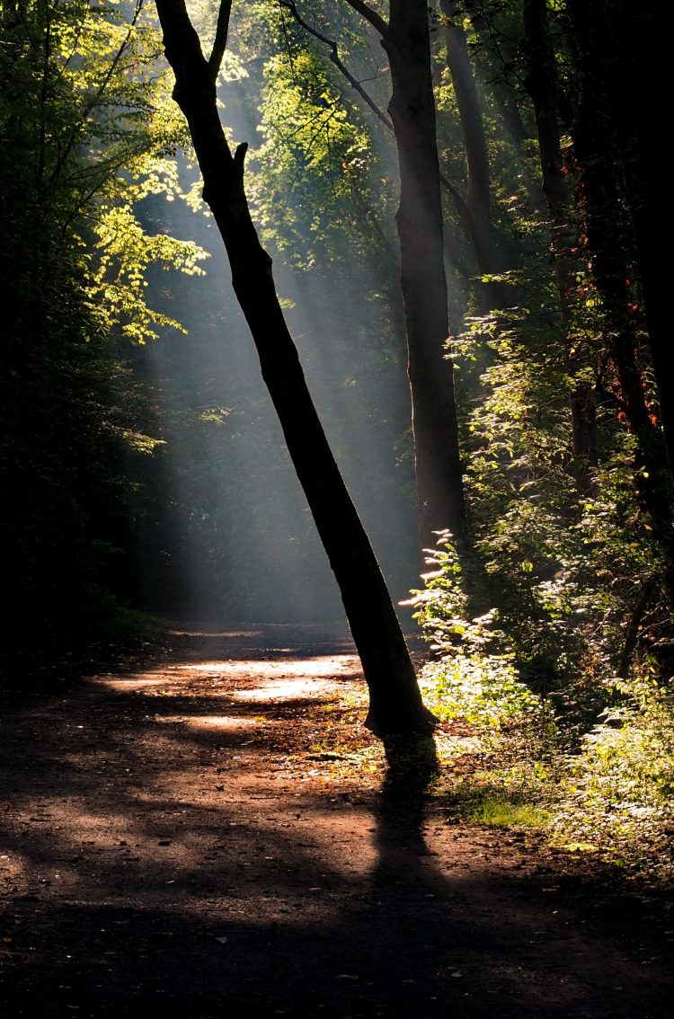 Dark Forest Road With A Ray Of Sunshine 4k Uhd Wallpaper