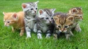 Kittens in the grass HD
