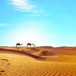 Sahara Dreaming