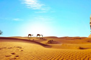 Sahara Dreaming HD