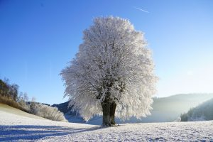 Snowy Tree (Winter) 8K