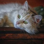 Beautiful White Cat With Green Eyes 4K