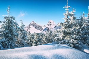 Snowy Forest (Winter) HD