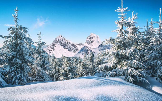 Snowy Forest Winter HD