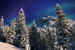 Snowy Forest, Milky Way (Winter) HD