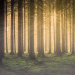Fantasy Forest HD